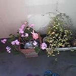 画像: ベランダ                             - ベランダ付きフローリング個室(約6畳)5万円 ペット可 最寄り駅は鶯谷,日暮里、上野。