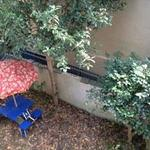画像: 眺望                             - 京都岡崎の庭付き一軒家のシェアメイトを急募しています