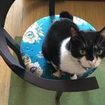 画像: その他                             - 【薬院・警固】猫と一緒に暮らすルームメイト募集します