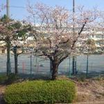 画像: 眺望                             - ☆新規オープンのシェアハウス!シェアメイト募集中♪ ¥28,000~