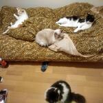 Photo: シェアメイト                             - 築浅分譲マンションにてルームメイトを募集しています(ペット可)