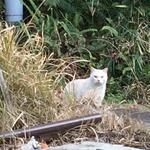 Photo: Others                             - 庭作業、アトリエ、田舎の平屋を月6000円で